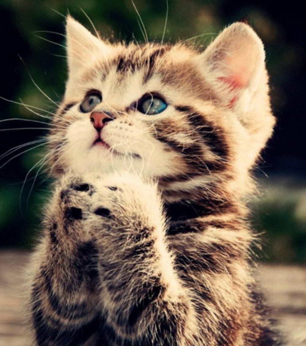 Cat.jpg?mtime=20200403135904#asset:18086:midWidth