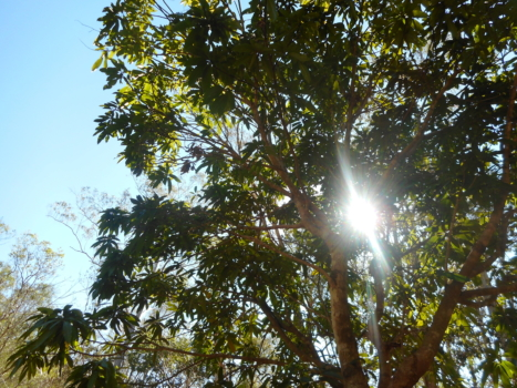 Sun Through Tree
