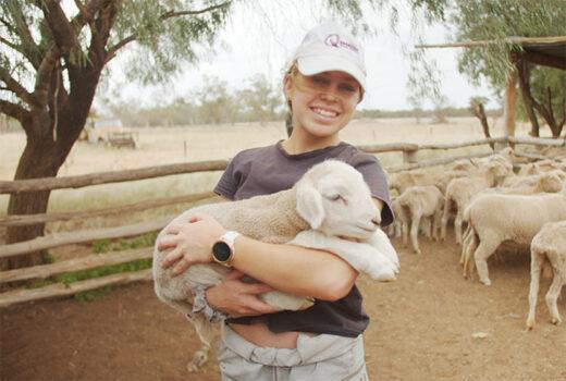 Missions Sheep