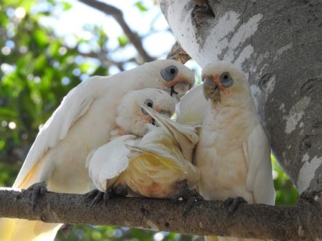 Parrots 1208740 1920 2