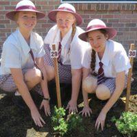 2016-Year-12-Tree-Planting-3