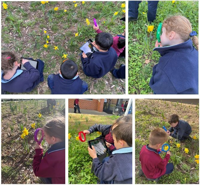 Kindergarten students - 'curiosity' and 'observation'.