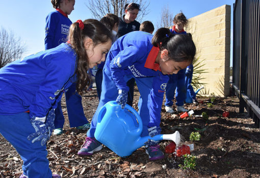 Schools Tree Day Foundation 17