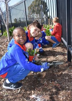 Schools Tree Day Foundation 4