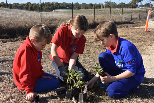 Schools Tree Day Years 2 And 6 10