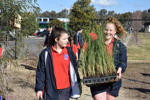 Schools Tree Day Years 2 And 6 14