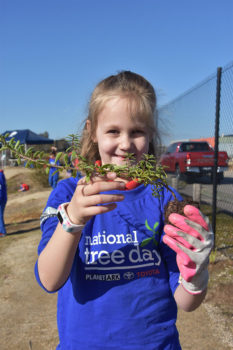 Schools Tree Day Years 2 And 6 19