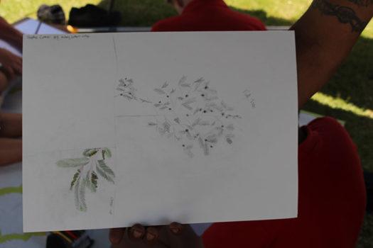 Yr 8 Biodiversity Botanical Art 2