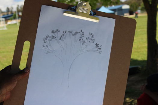 Yr 8 Biodiversity Botanical Art 4