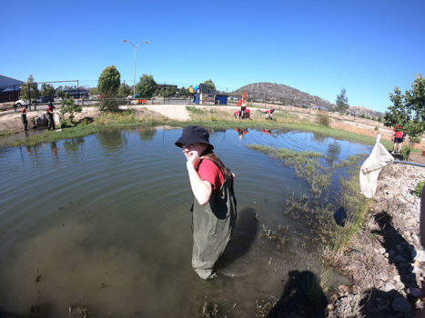 Yr 8 Biodiversity Water Bugs 15