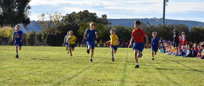 03 Primary Athletics Wed Sprints 364