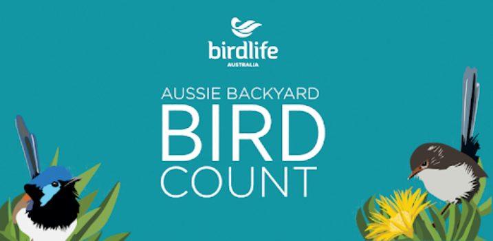 Backyard Bird Count Image