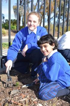 News Nat Tree Day 11