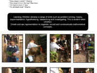 Tree Planting Copy 2