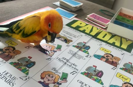 Caitlyn Pets Make Great Playmates