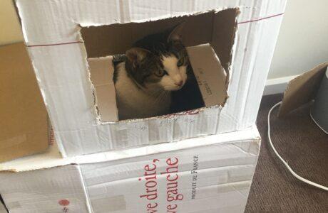Tabitha Plummer Builda Cat Fort 2 31 Aug2020